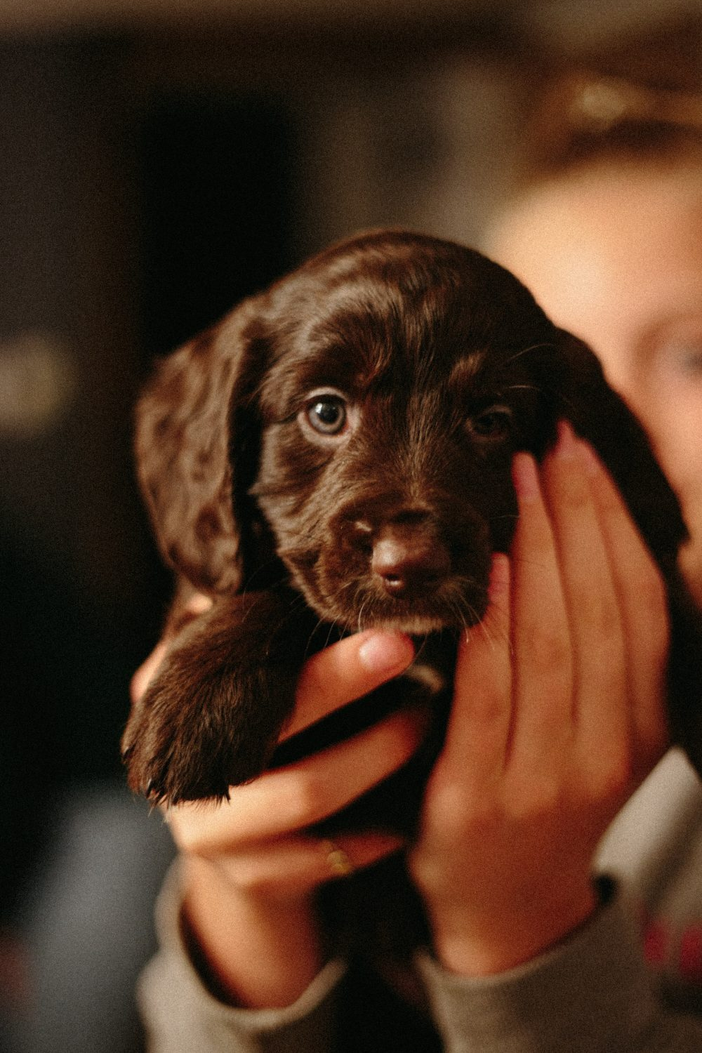 Puppy-black-looking-with-eyes-of-love